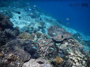 Rich underwater sea life