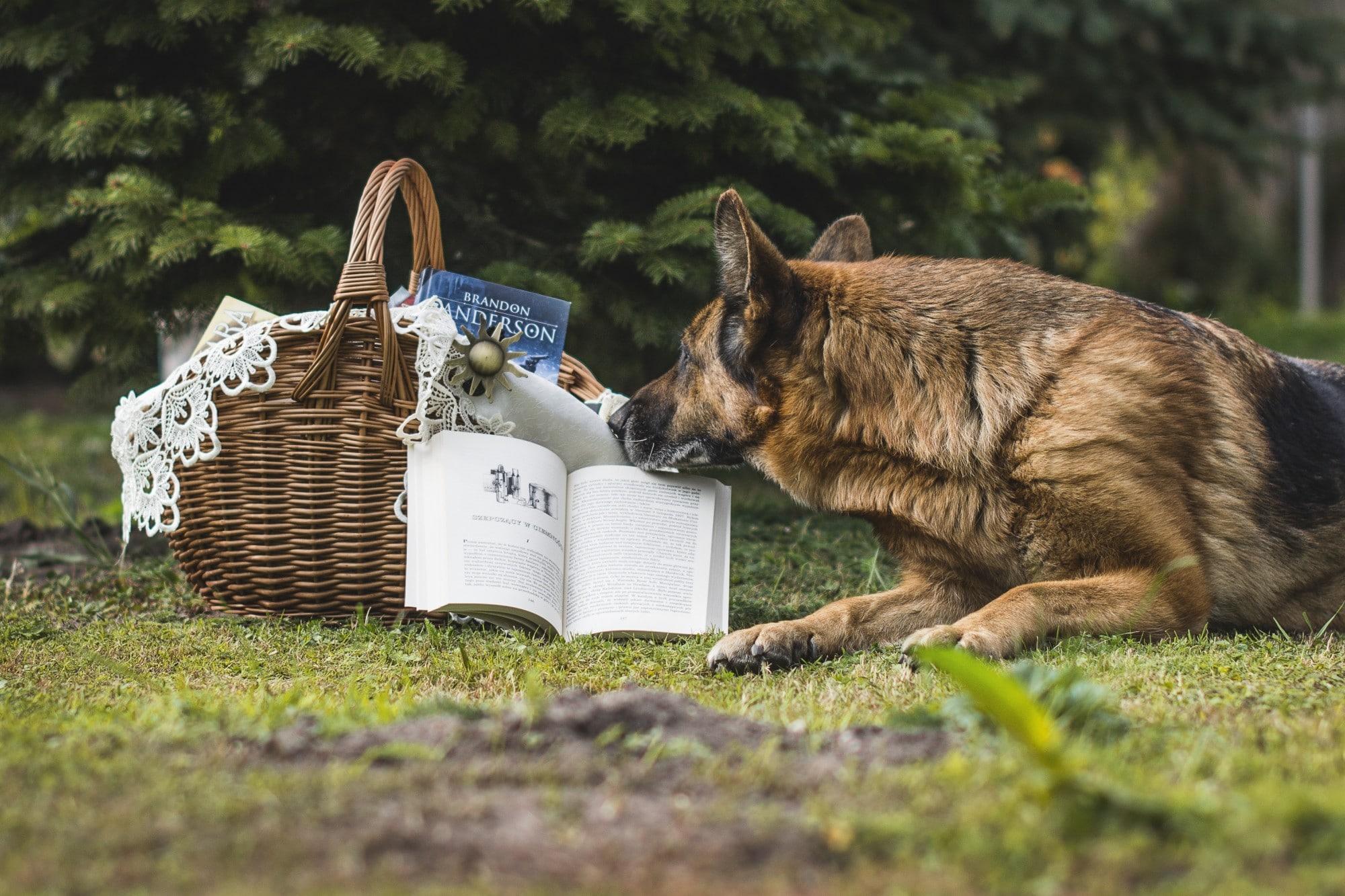 plan a picnic